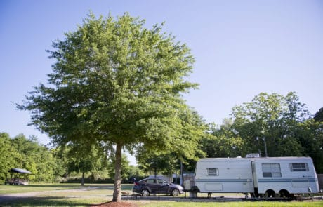 Campsite at Alice's RV Park in Opelousas