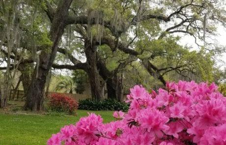 Nine Oaks au Joubert in Arnaudville, Louisiana