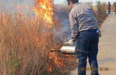 Cajun Prairie Habitat Restoration Site in Eunice, Louisiana
