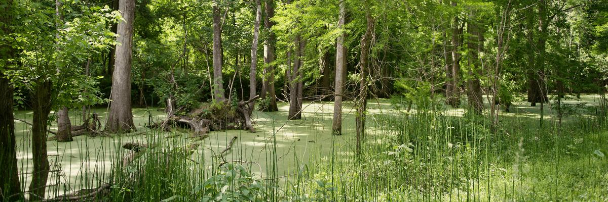 Sherburne Wildlife Management Area
