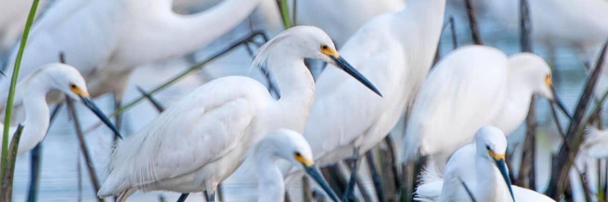 Bayou Bird Fest, Washington, Louisiana