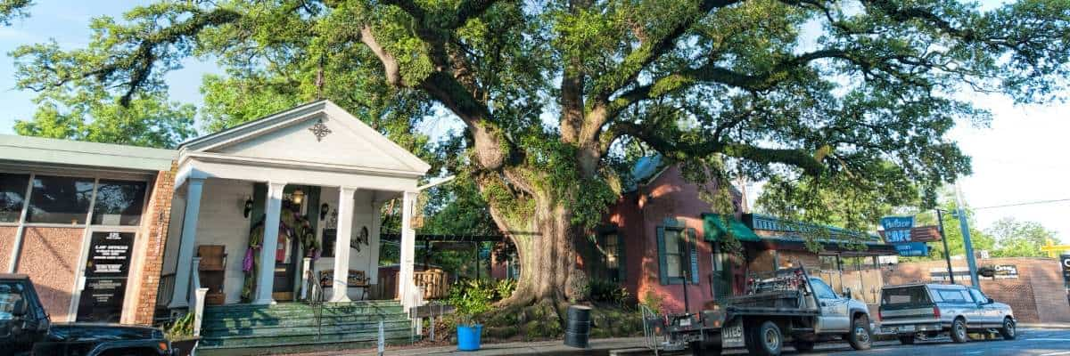 Jim Bowie Tree, Opelousas, Louisiana