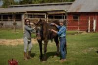 Dashing W Farm, Opelousas, Louisiana